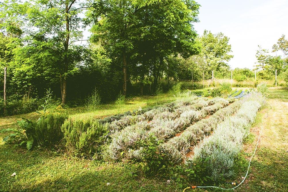 sprehod_med_zeliscnimi_vrtovi