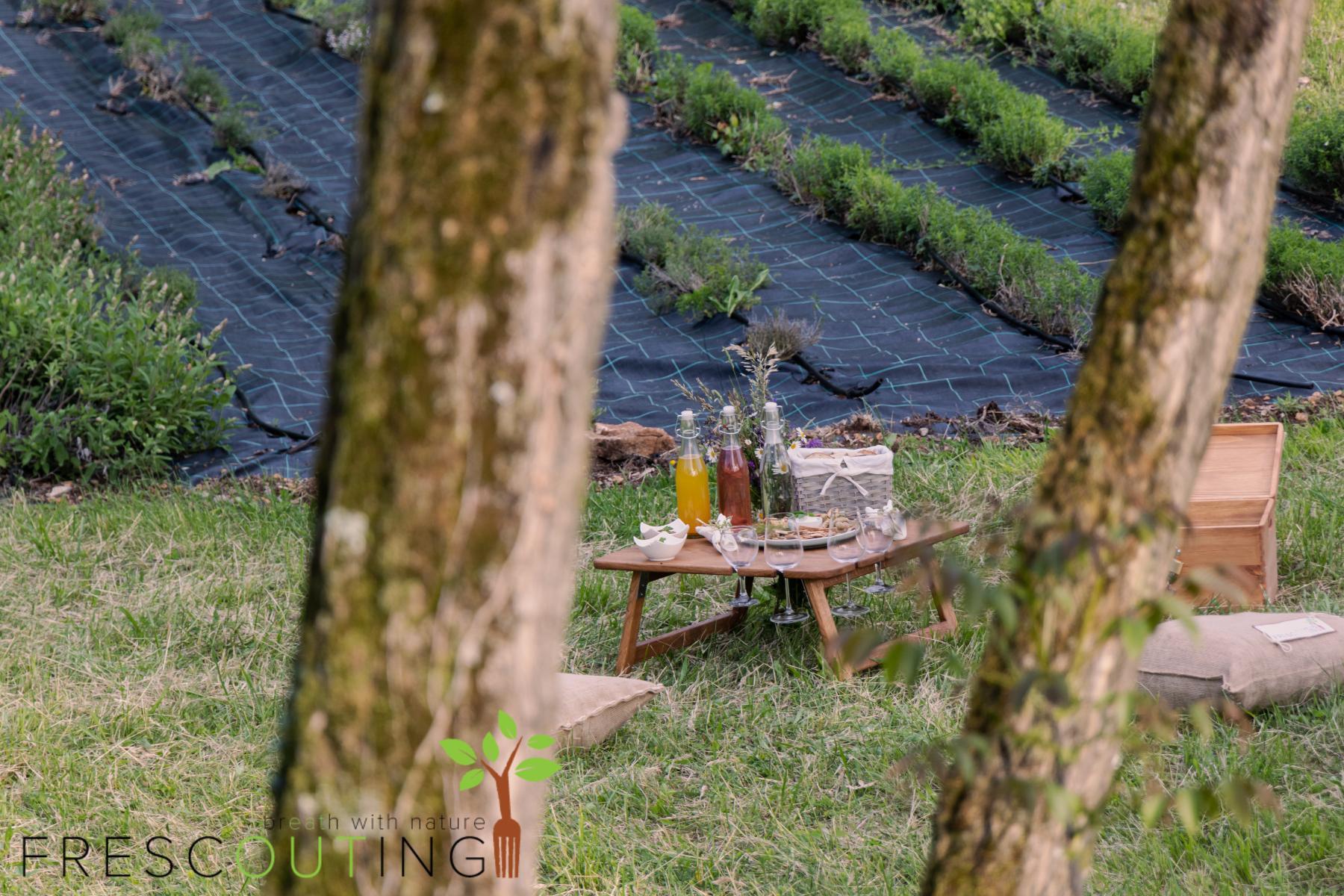 Frescouting kulinarična zeliščna pustolovščina